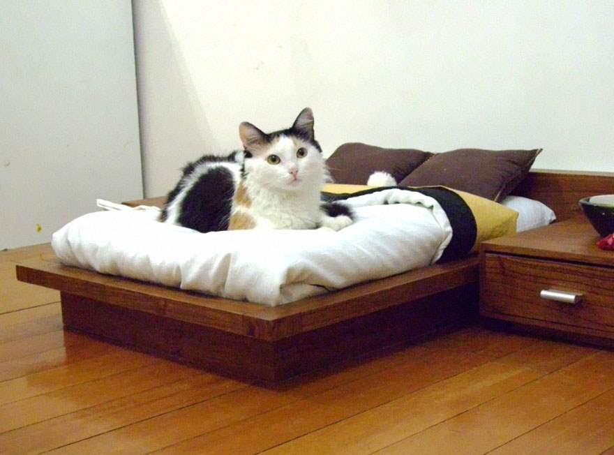 cat-furniture-112