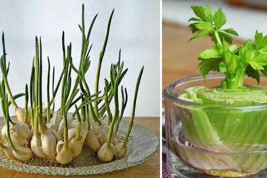 7 druhů zeleniny, kterou můžete pěstovat znova a znova