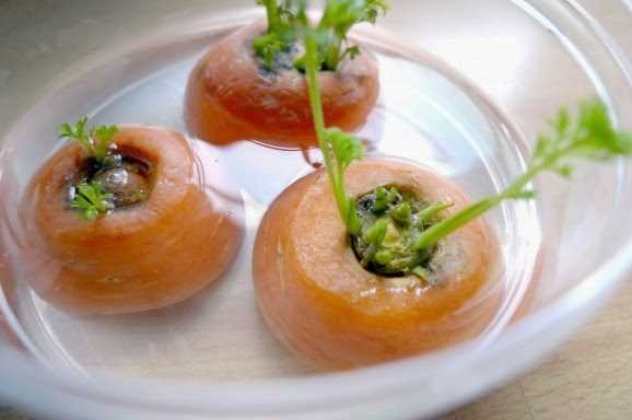 8 Vegetables That You Can Regrow Again And Again. (3)
