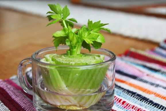 8 Vegetables That You Can Regrow Again And Again. (5)