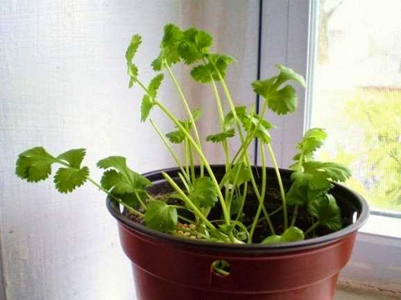8 Vegetables That You Can Regrow Again And Again. (7)