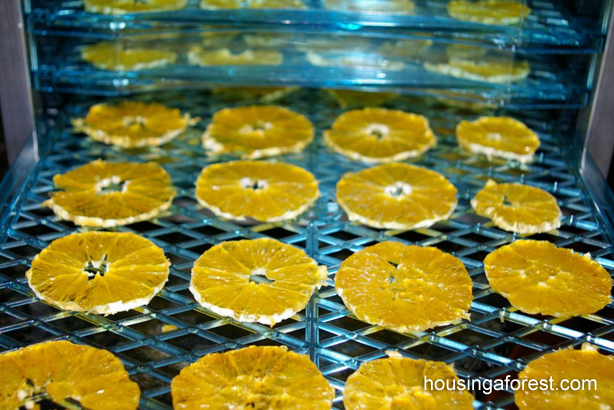 dried_oranges