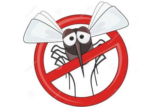 Návod, jak se zbavit komárů