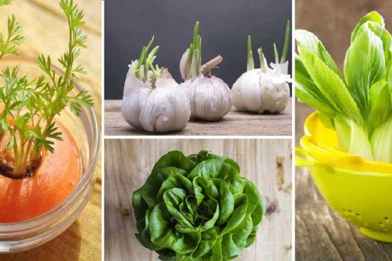 10 druhů zeleniny, kterou můžete pěstovat znova a znova