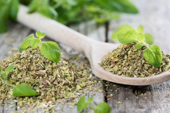 Léčivé oregano – kde a jak sbírat + 5 domácích receptů